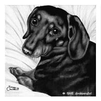 """Lykke Li's adorable dachshund """"lil bit"""""""